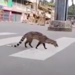 Animals Reclaiming Cities
