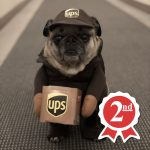 UPS Pug